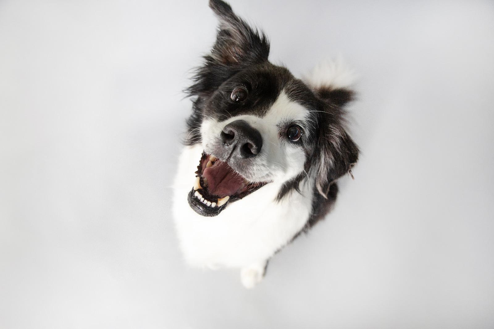 dog facing up at camera