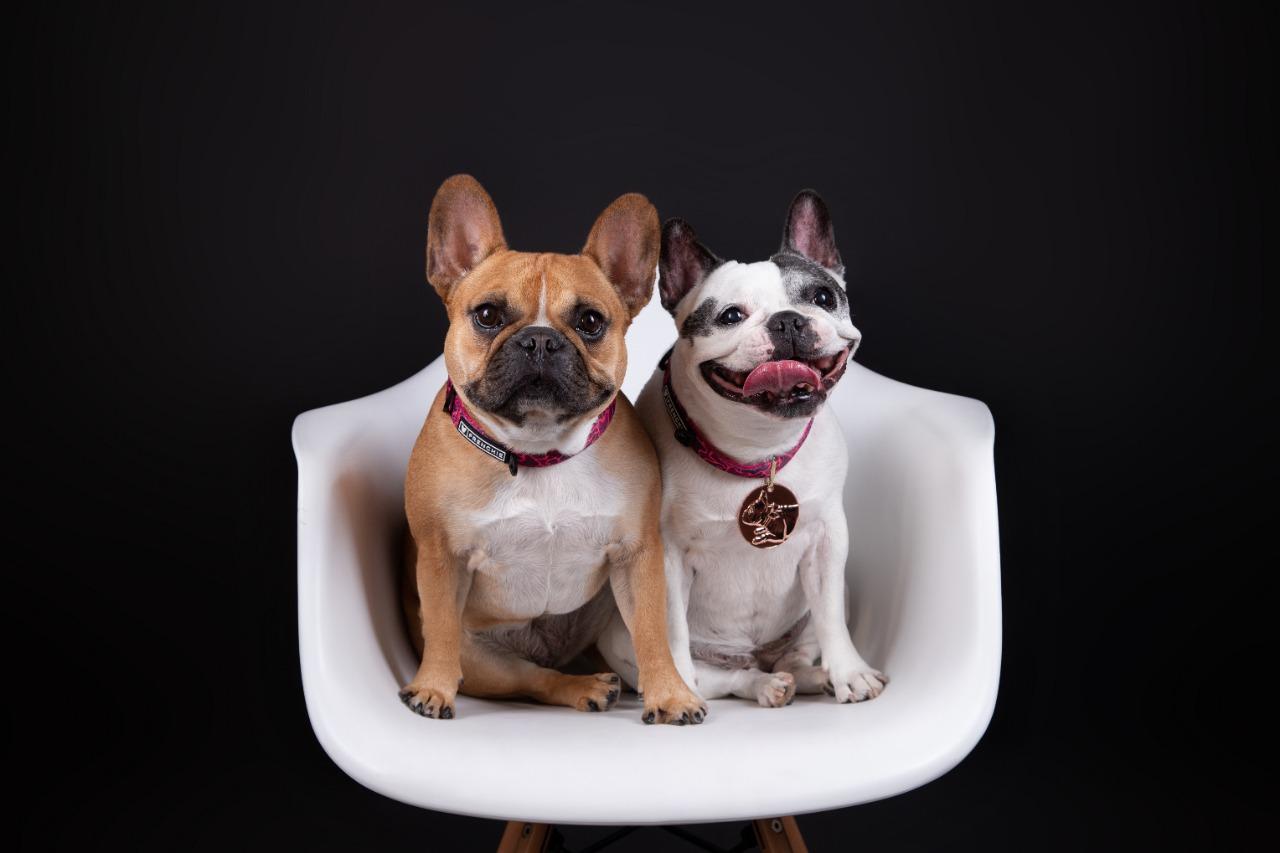 Nuestro negocio familiar, incluídas las mascotas
