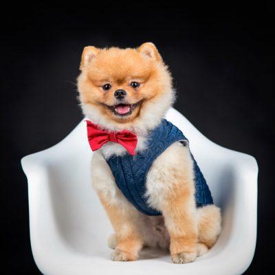 sesion de mascotas perro sentado en silla